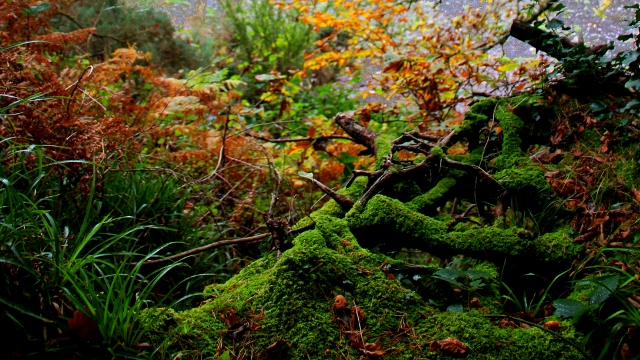Moss Undergrowth